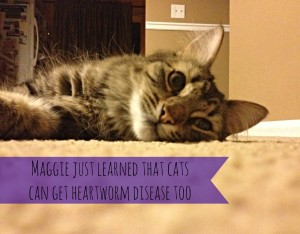 Why is heartworm prevention so important?