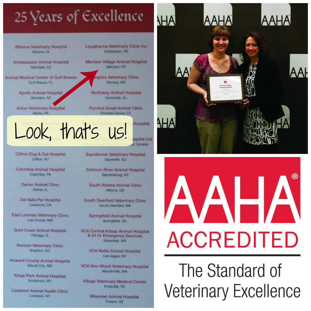 We have been AAHA accredited for 25 years!